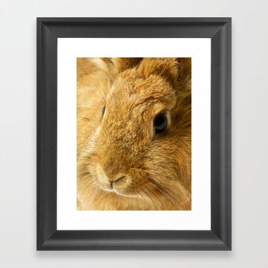 Little Rabbit II Framed Art Print