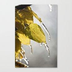 Dripping Ice Canvas Print