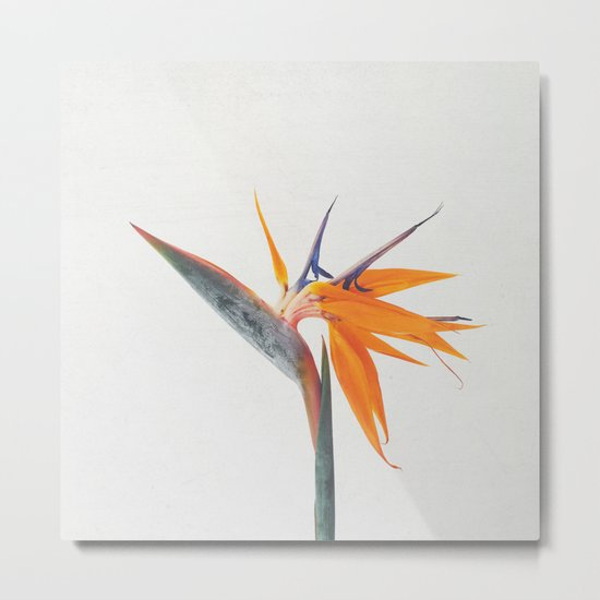 Bird of Paradise by cassiabeck