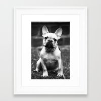french bulldog Framed Art Prints featuring French Bulldog by Kathleen Schulze