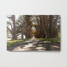 Tunnel of Trees Photography Print Metal Print