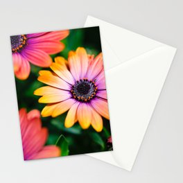 Colors in Summer Stationery Cards
