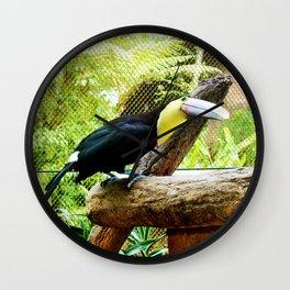 Curious Toucan Wall Clock