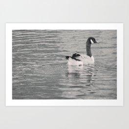 Goose on the lake Art Print