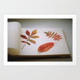 Herbarium Art Print
