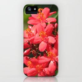 Jatropha red flower iPhone Case