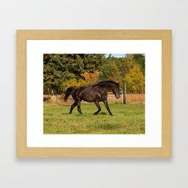 Rocky Mountain Horse Impulsive Ghost Framed Art Print