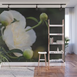 Portrait of a Peony at Dawn - Floral Photography Wall Mural