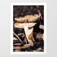 mushroom Art Prints featuring Mushroom by Alane Gianetti