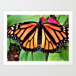 The Butterfly Dance Art Print