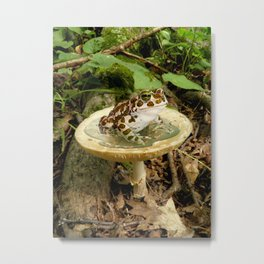Toad Stool. Metal Print