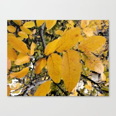 Yellow Leaves of Autumn Canvas Print