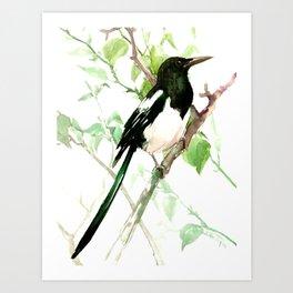 Magpie Bird, magpie Art Print