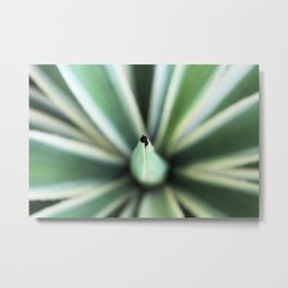 Agave From Above Metal Print