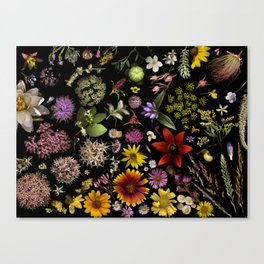 Flowers of Plants Native to Manitoba, Canada Canvas Print