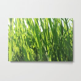 Large reeds leaves in a cane grove Metal Print