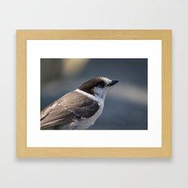 Gray Jay Portrait Framed Art Print