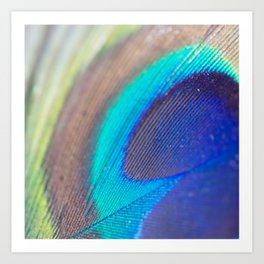 Peacock feather - Macro Photography Art Print