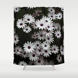 White African Daisies In A Flower Bed Shower Curtain