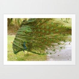 Peacock Blooper! Art Print