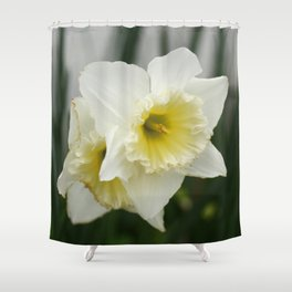 White and yellow daffodils, early spring flowers Shower Curtain