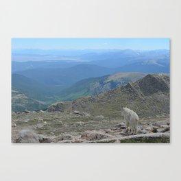 Pensive Mountain Goat on the Rocky Mountains Canvas Print