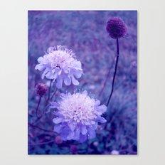 Meadow of Dreams Canvas Print