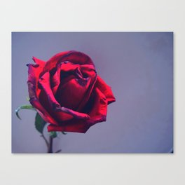 One and Only Canvas Print