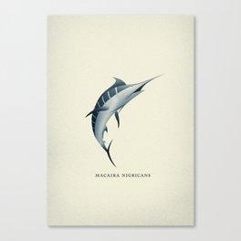 Macaira Nigricans - Blue Marlin Canvas Print