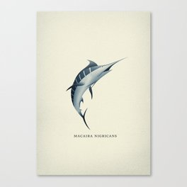 Macaira Nigricans - Blue Marlin Canvas Print