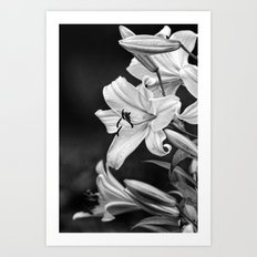 Day Lily, Art Print