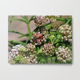Wasp 1754 Metal Print