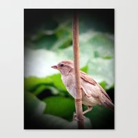 sparrow Canvas Prints featuring Sparrow by Angelandspot