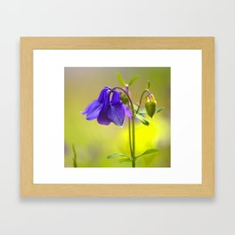 Purple Columbine In Spring Mood Framed Art Print