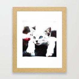 Cat Art Cute Kitten With Blue Eyes Animal Design Framed Art Print