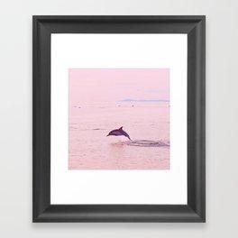 Pink Porpoise Framed Art Print