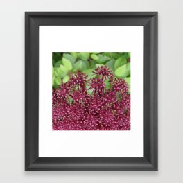 Purple flower Framed Art Print