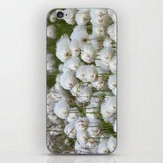 Cotton grass iPhone & iPod Skin