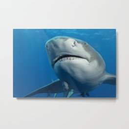 Lemon Shark Upclsoe Metal Print