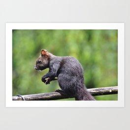 Squirrel Verifiable Kitten Rodent Art Print