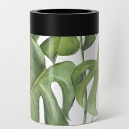 Monstera deliciosa 3 Leaves Can Cooler