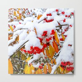 Spindle Tree Flowers Under Snow Metal Print