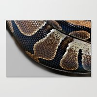 monty python Canvas Prints featuring Python by Elaine C Manley