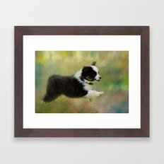 Miniature Australian Shepherd Puppy 2 Framed Art Print