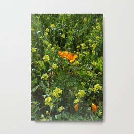 Springtime Orange Wildflower California Macro  Metal Print