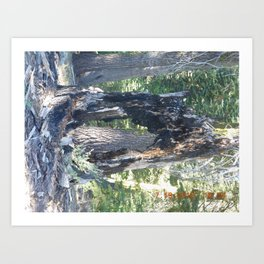 road trip, burnt, burned tree, damage, forest fire, landscape, tree  Art Print