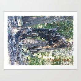 road trip, burnt, burned tree, damage, forest fire, landscape, tree  Art Print