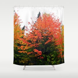 Forest Pallet of Colors Shower Curtain