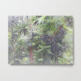 Yew Tree Metal Print