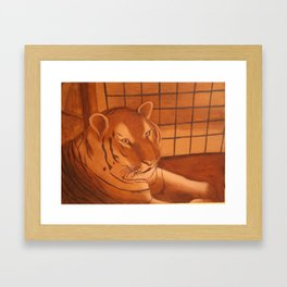 Tiger at the Zoo Framed Art Print